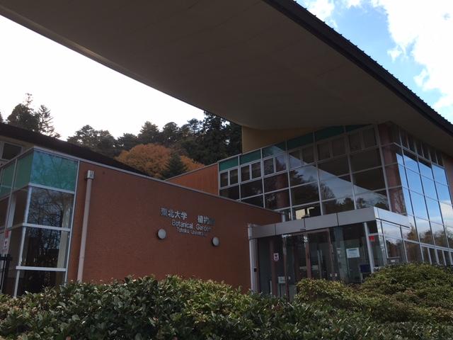 東北大学植物園2015  年晩秋