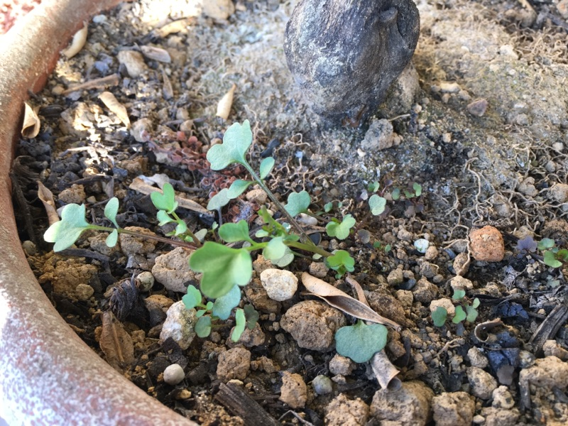 植物たちは季節の変化に敏感