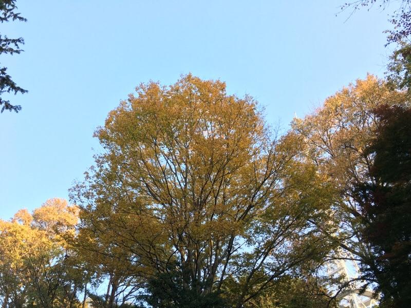 秋を感じに