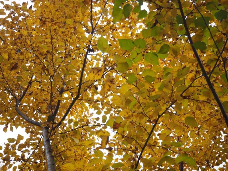 秋の東京散策へ