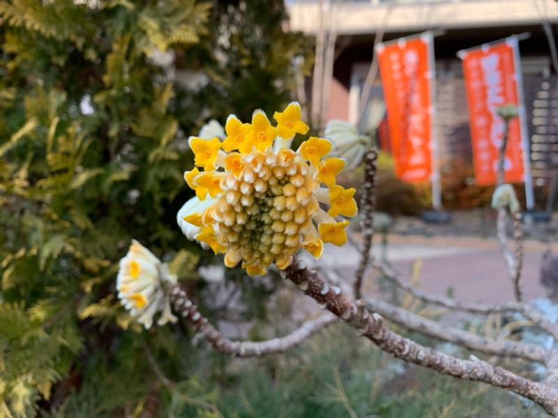 花粉に阻まれる