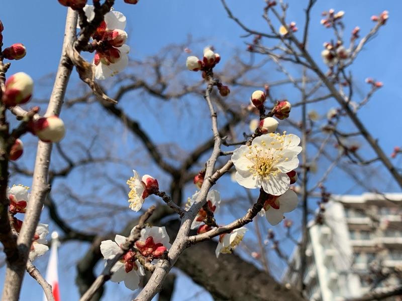 花粉の季節早く終われ